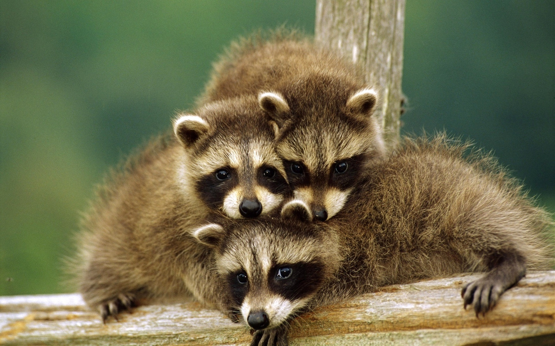 Картинки животных смешные смотреть в хорошем качестве, добрым