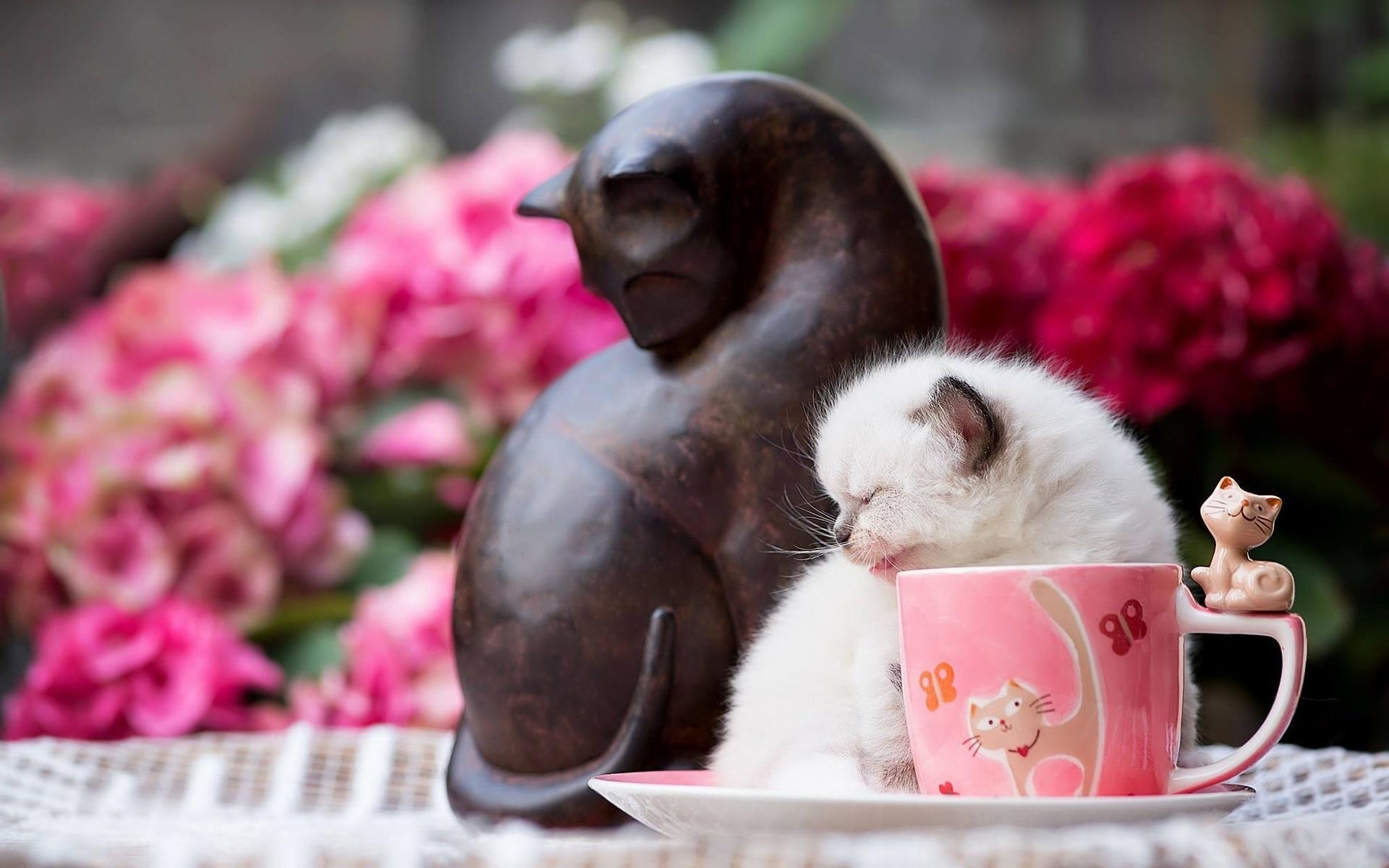 Растования открытки, красивые открытки с добрым утром с цветами и животными