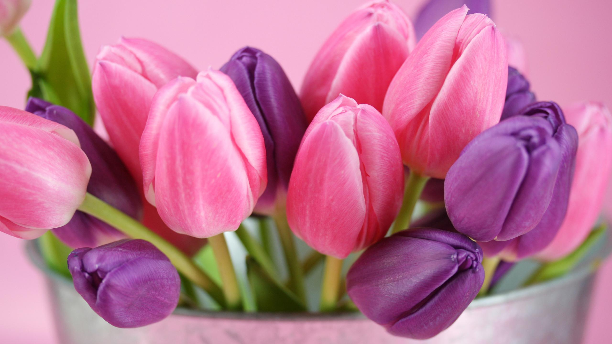 Открытки и фото тюльпаны, гиф доброе