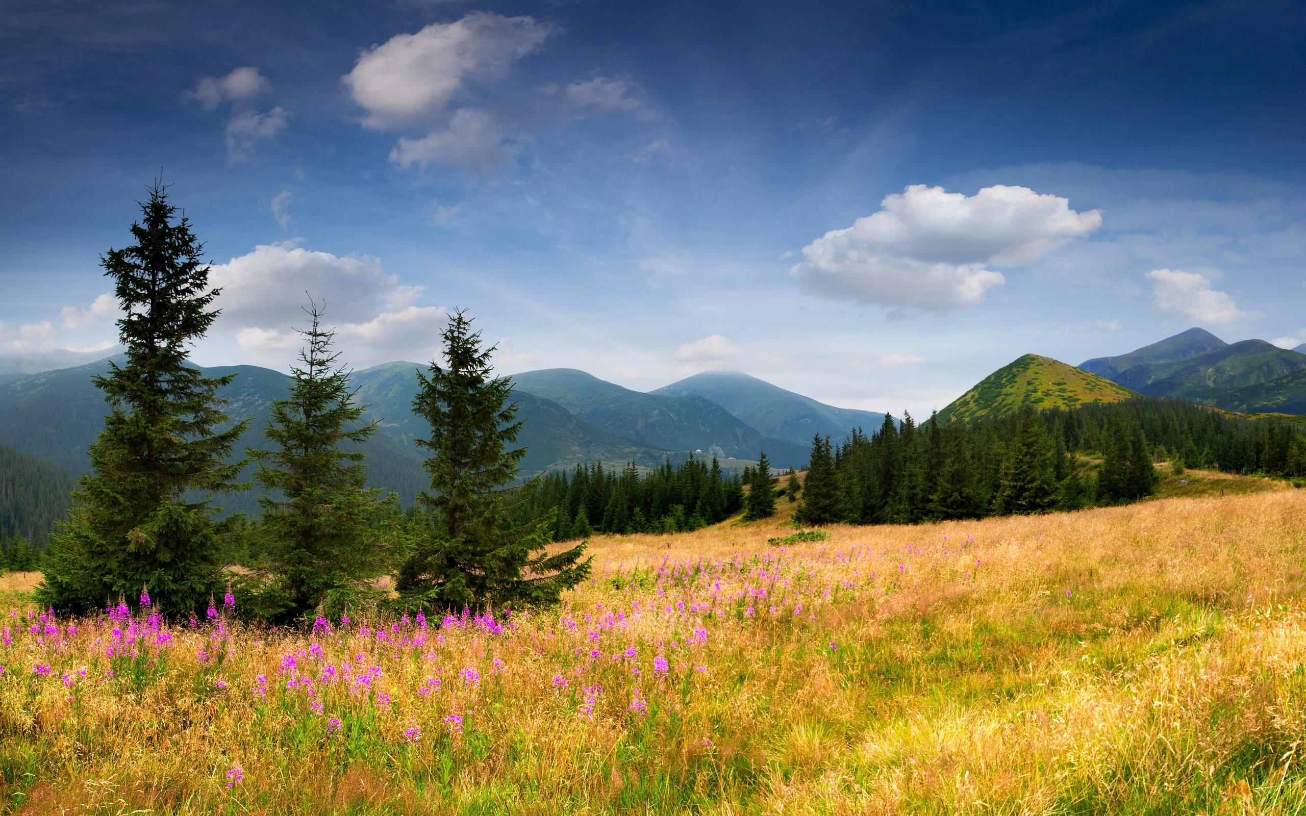 Красивые открытки природа россии, дудлинга как