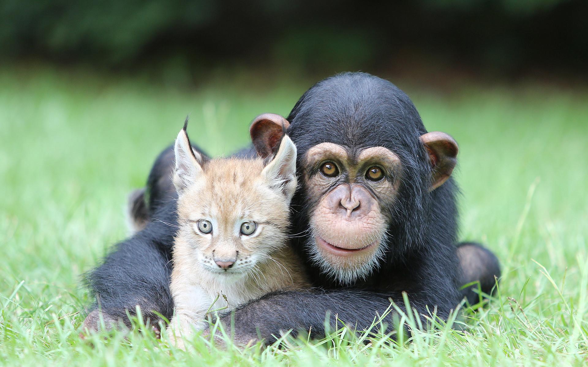 Картинки животных смешные смотреть в хорошем качестве, дедушки для детей