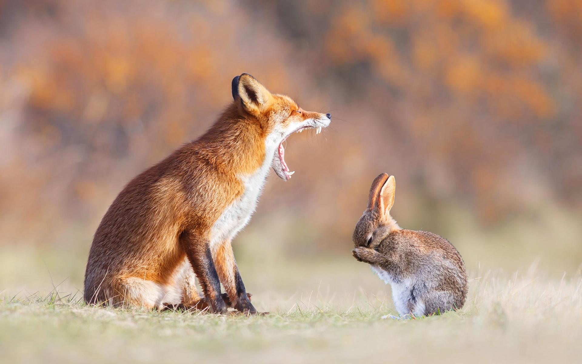 Прикольные картинки с лисенком и зайцем