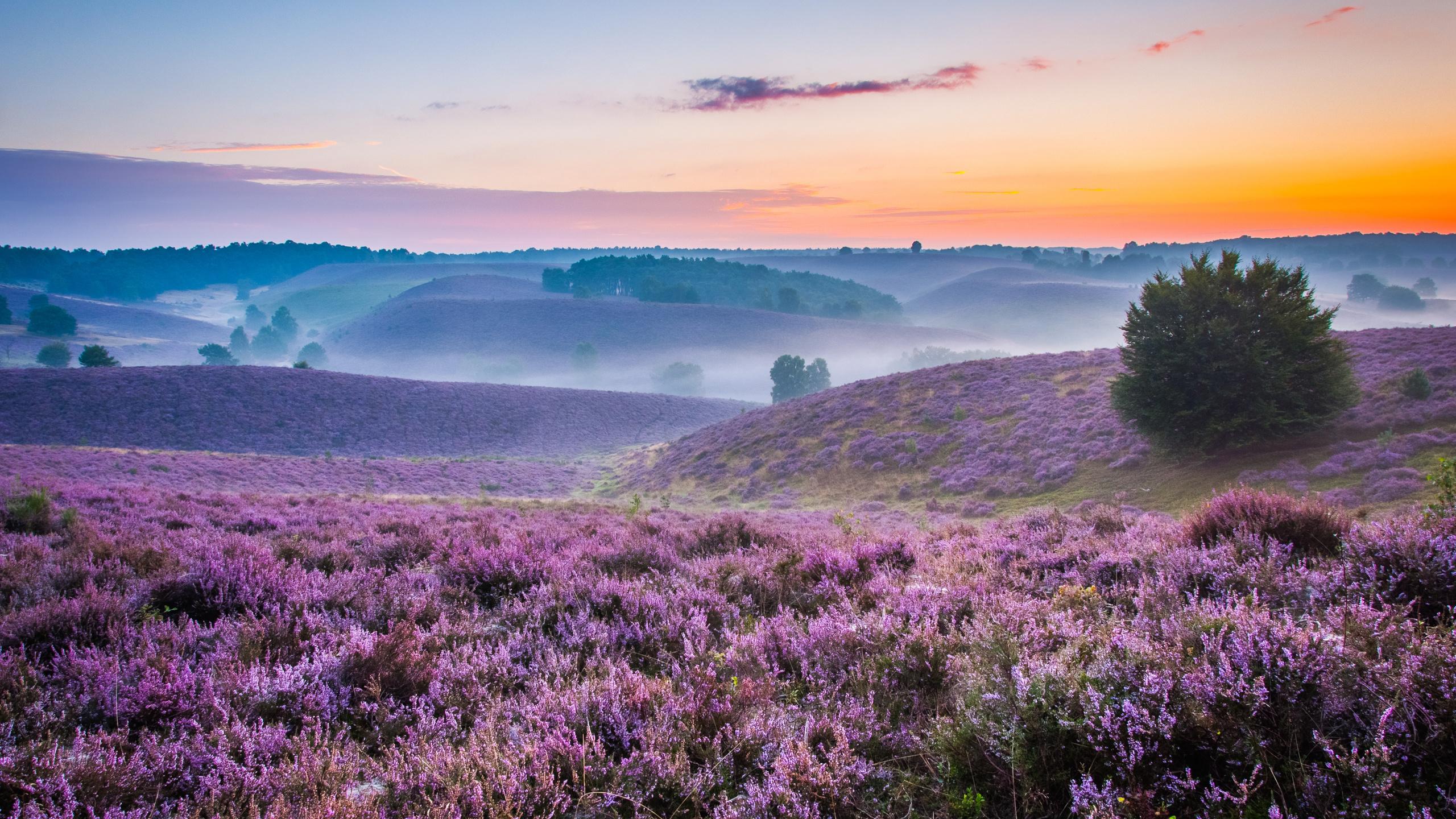 Картинки красивые утренние природа, картинка