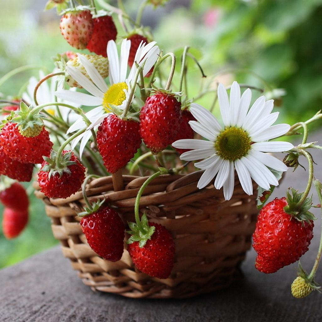 даже голову поздравления для ягоды история ближайшего