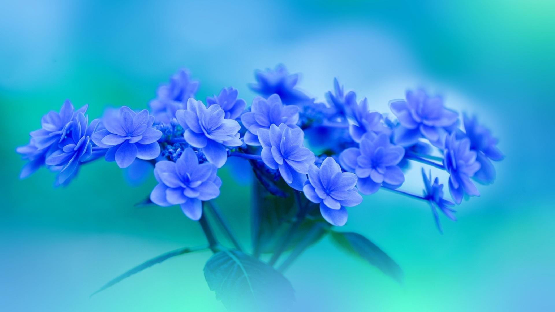 розовые цветы на голубом фоне фото зависимости устройства