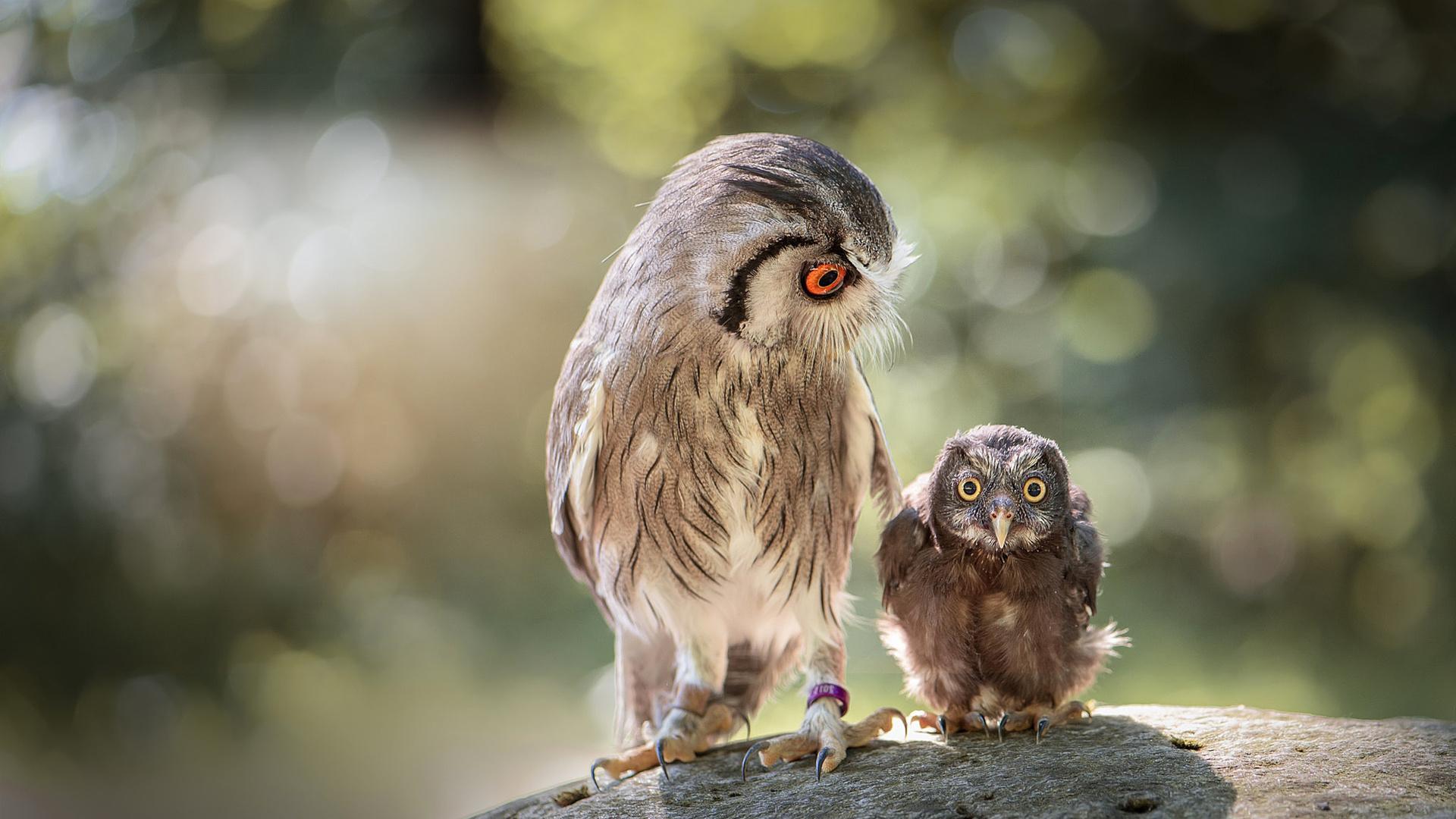 Картинки смешных птиц с надписью, своими