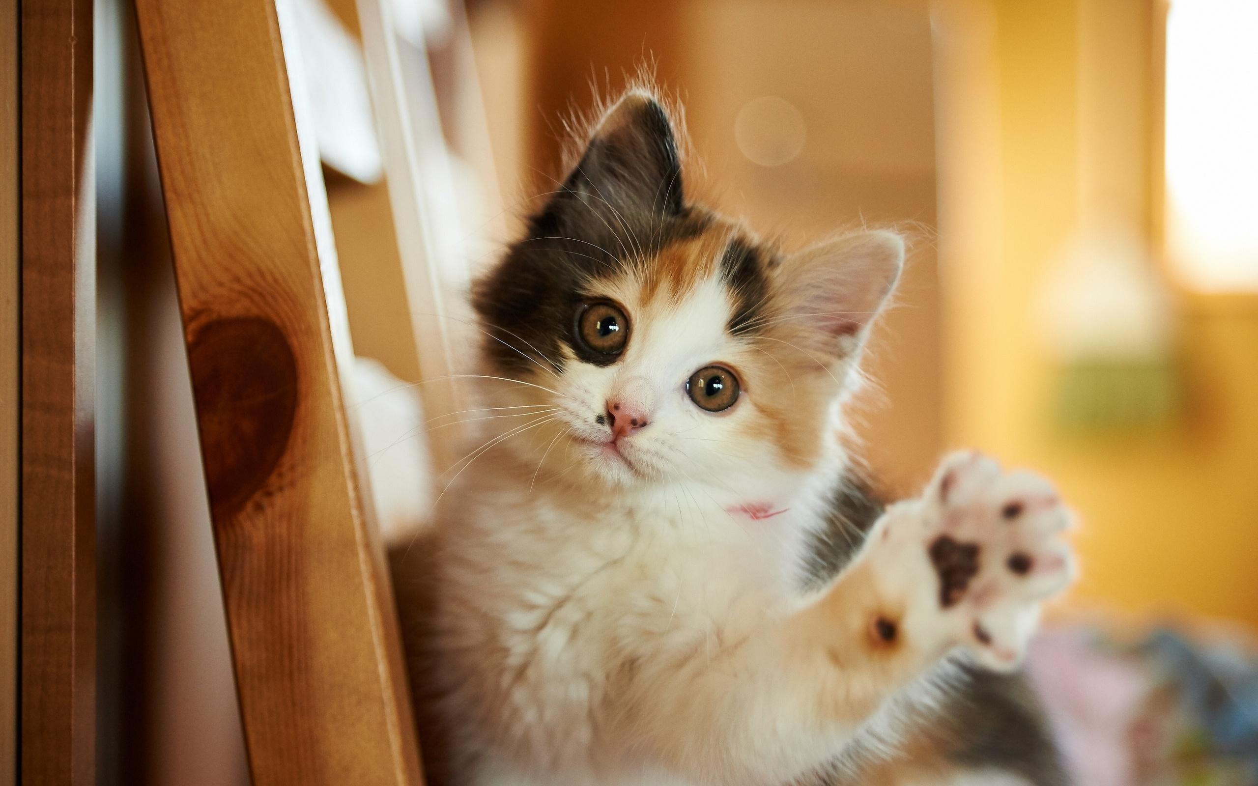 Картинки пьянство, животные смешные котята