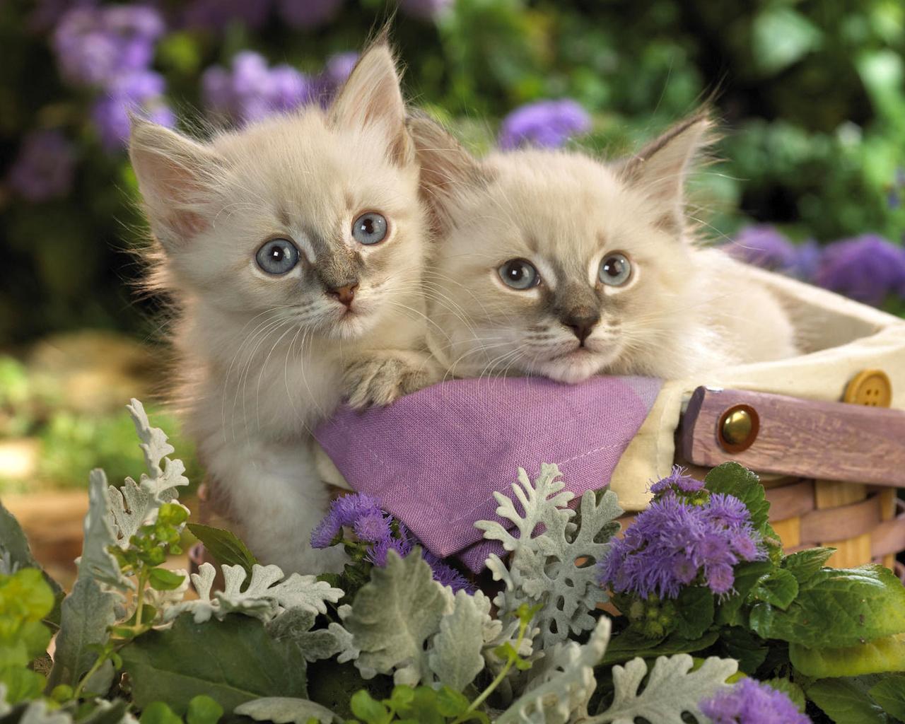 Открытки котеночек, святого валентина