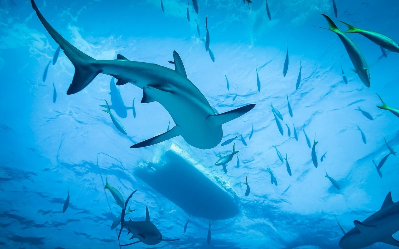 фото, под водой, акулы, рыба, лодка, океан