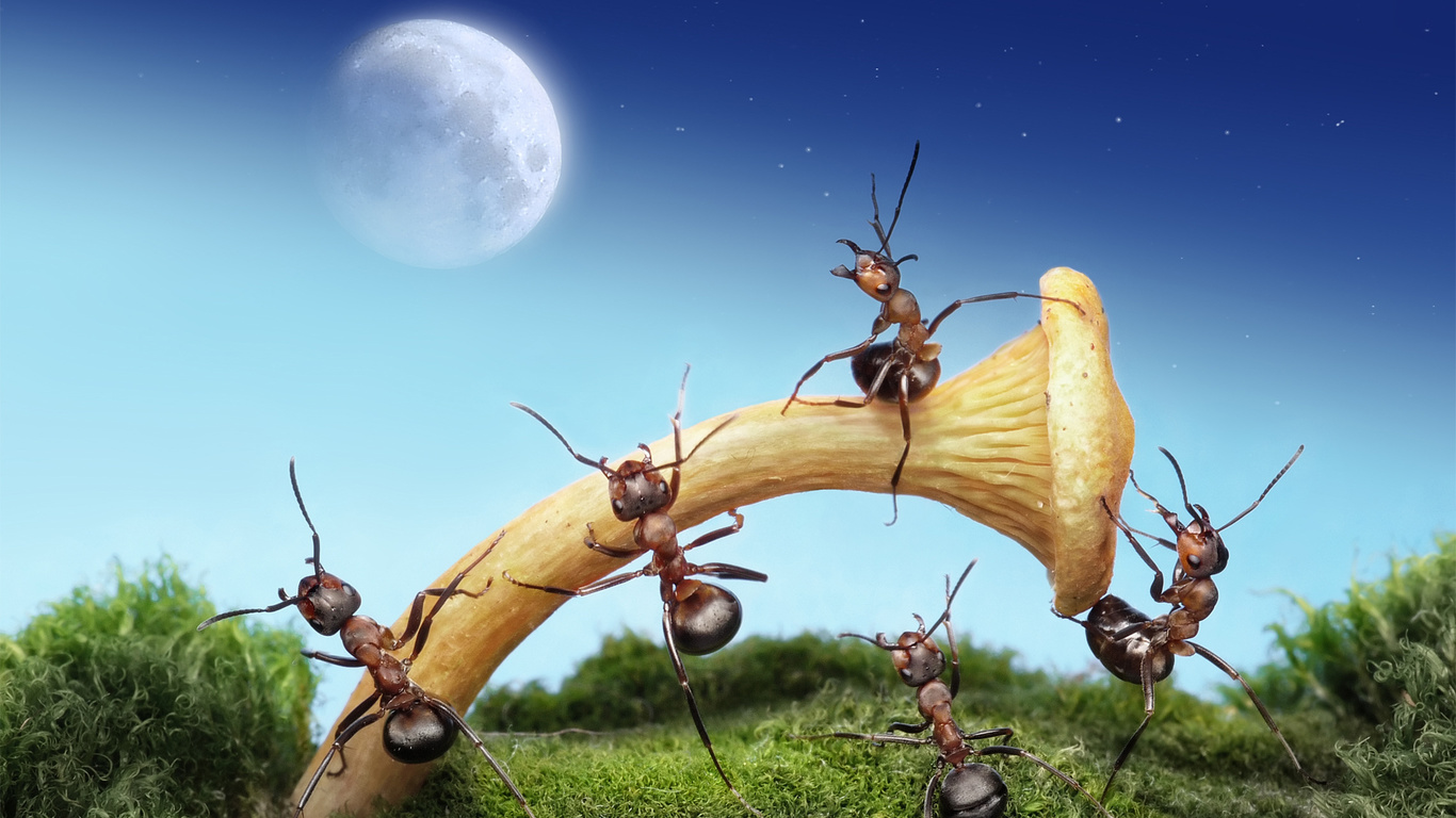 Прикольные картинки муравьи