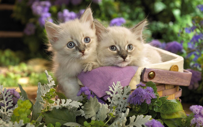 Красивый котенок открытка