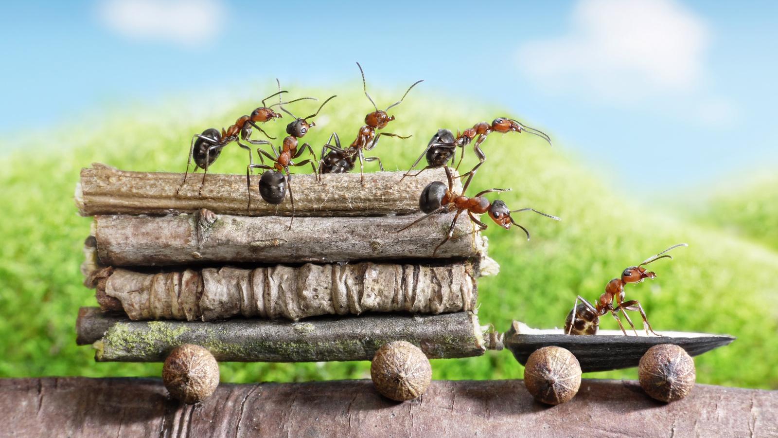 Новогоднюю открытку, муравей приколы картинка