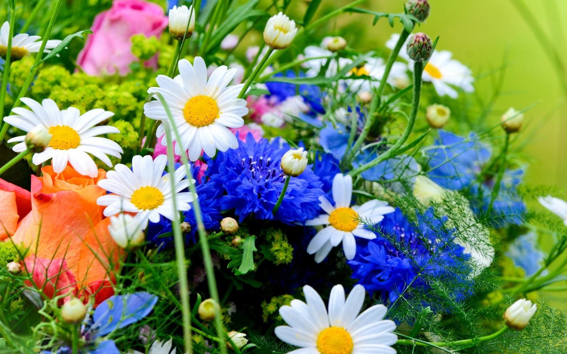 Летние цветы подарить какие, дешевый