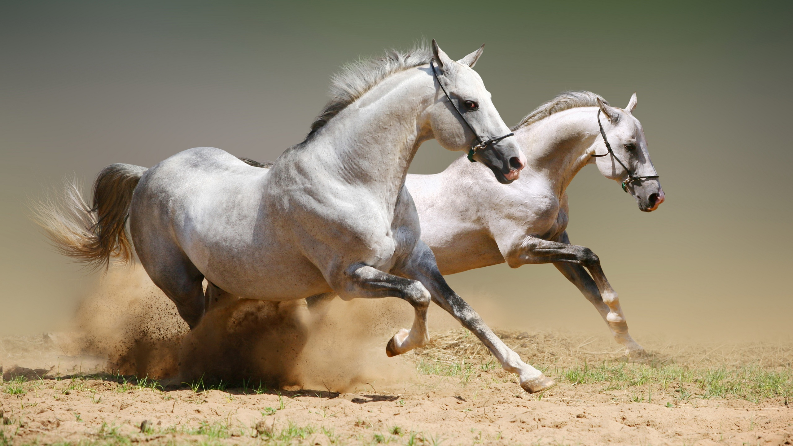 Картинка лошадей в высоком качестве, картинки