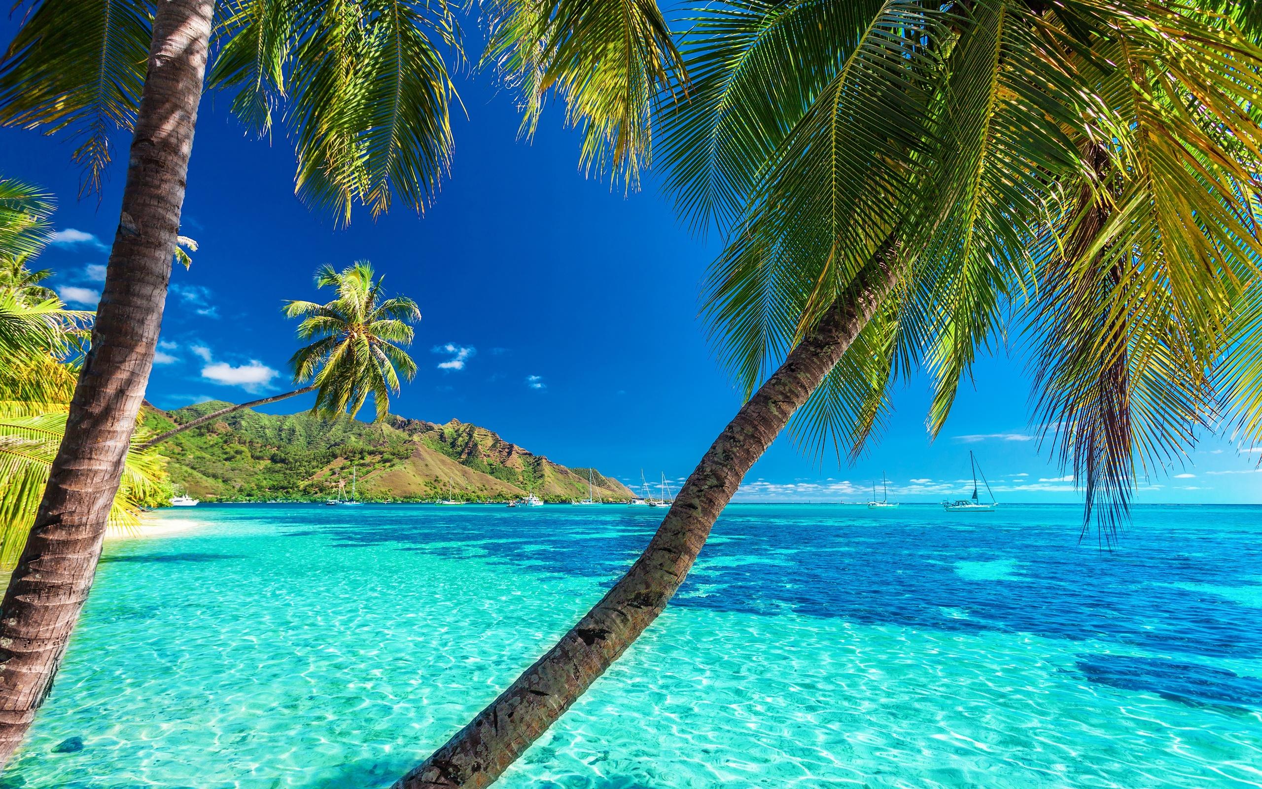 Открытки море пальмы