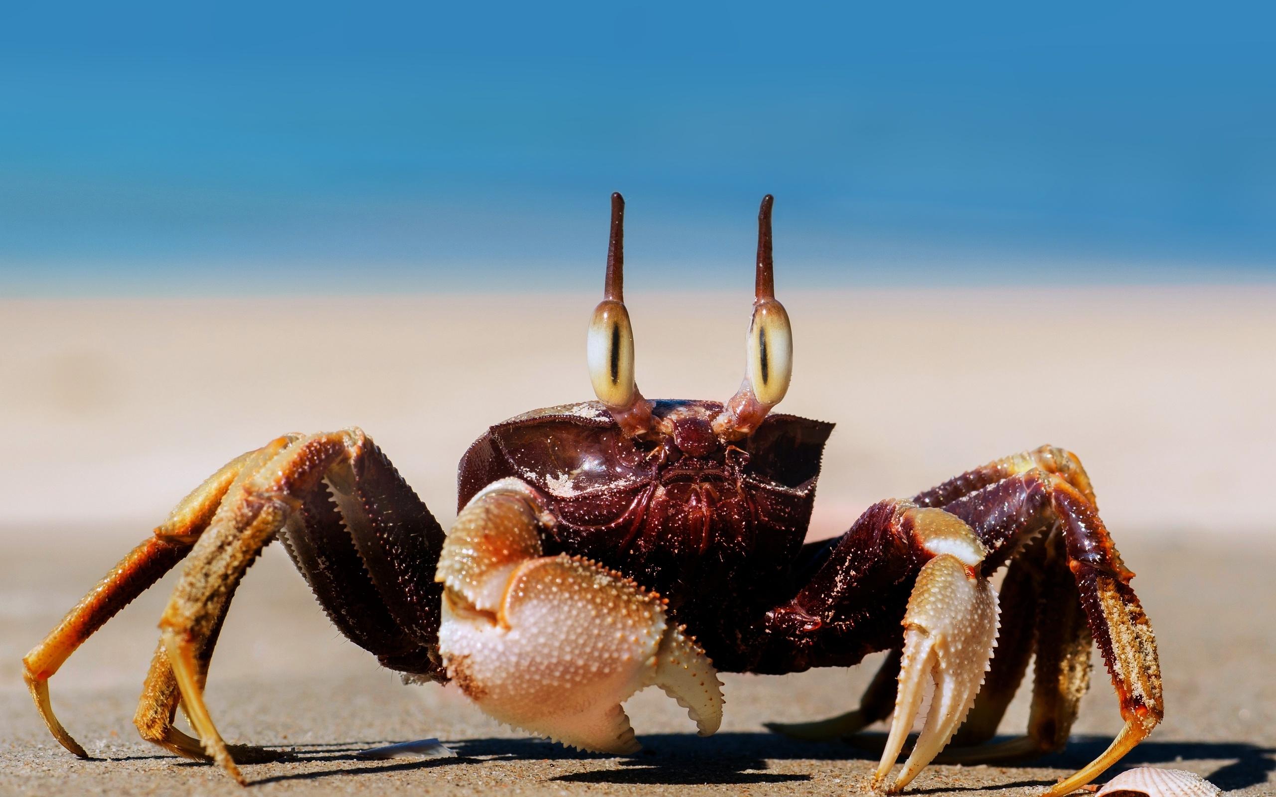 праздником фото морских животных краб много сил