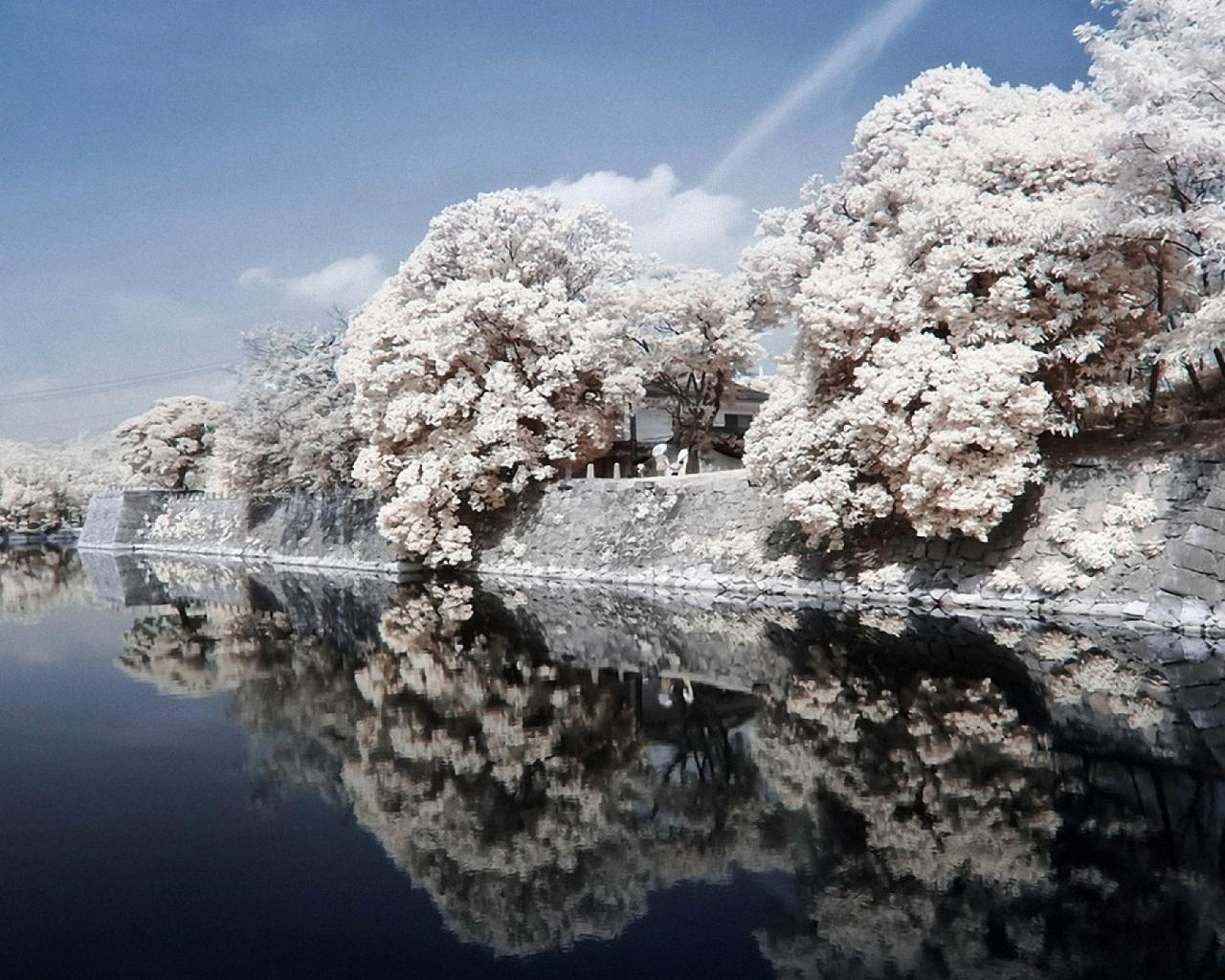 япония, берега, река, каменный, деревья, сакура