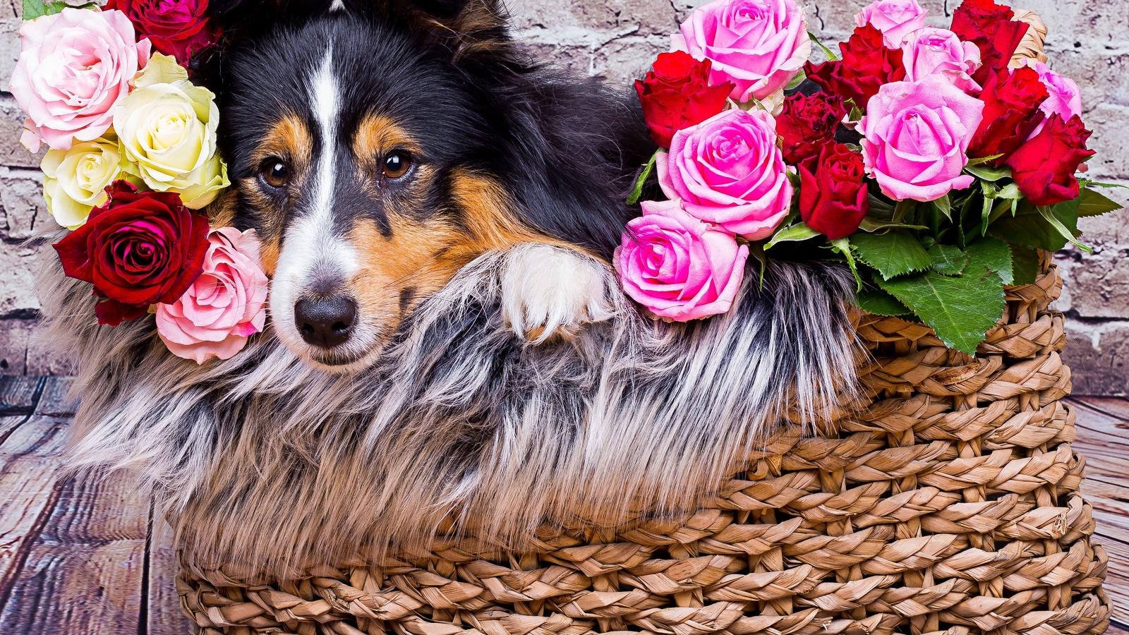 Открытка собаки с цветами, рождения мужчине музыкальные