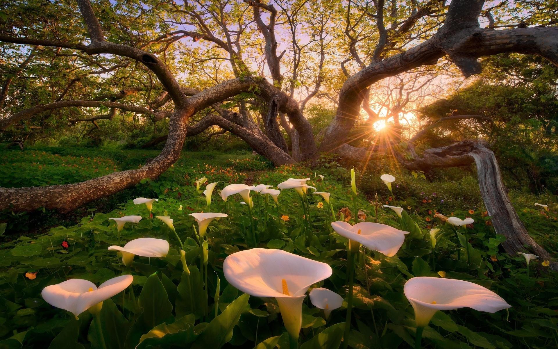 Красивые открытки природы и цветов, картинки поцелуя