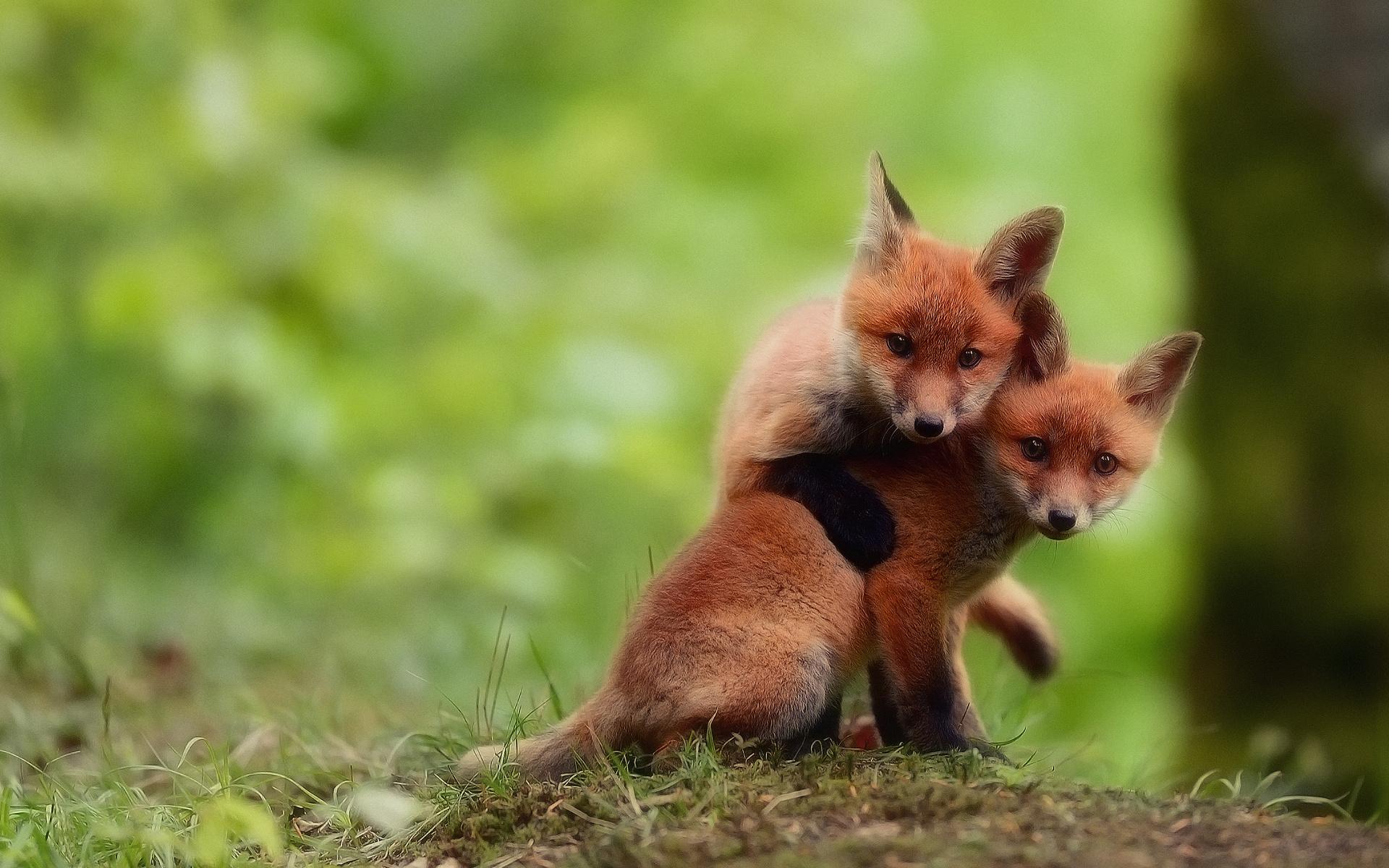 Крестиком, красивые картинки с природой и животными