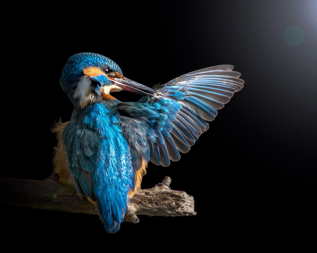 птицы мира, птица, зимородок, крыло, ветка, свет, блик