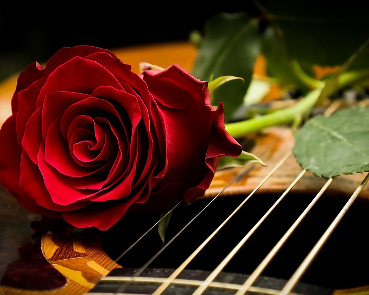 цветок, роза, струны, гитара