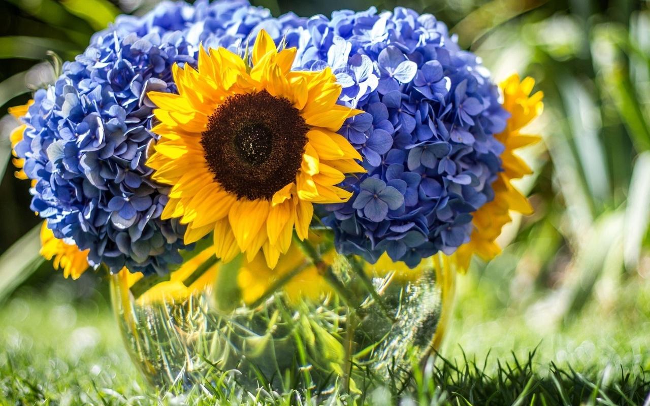 трава, лето, ваза, цветы, подсолнухи, гортензия