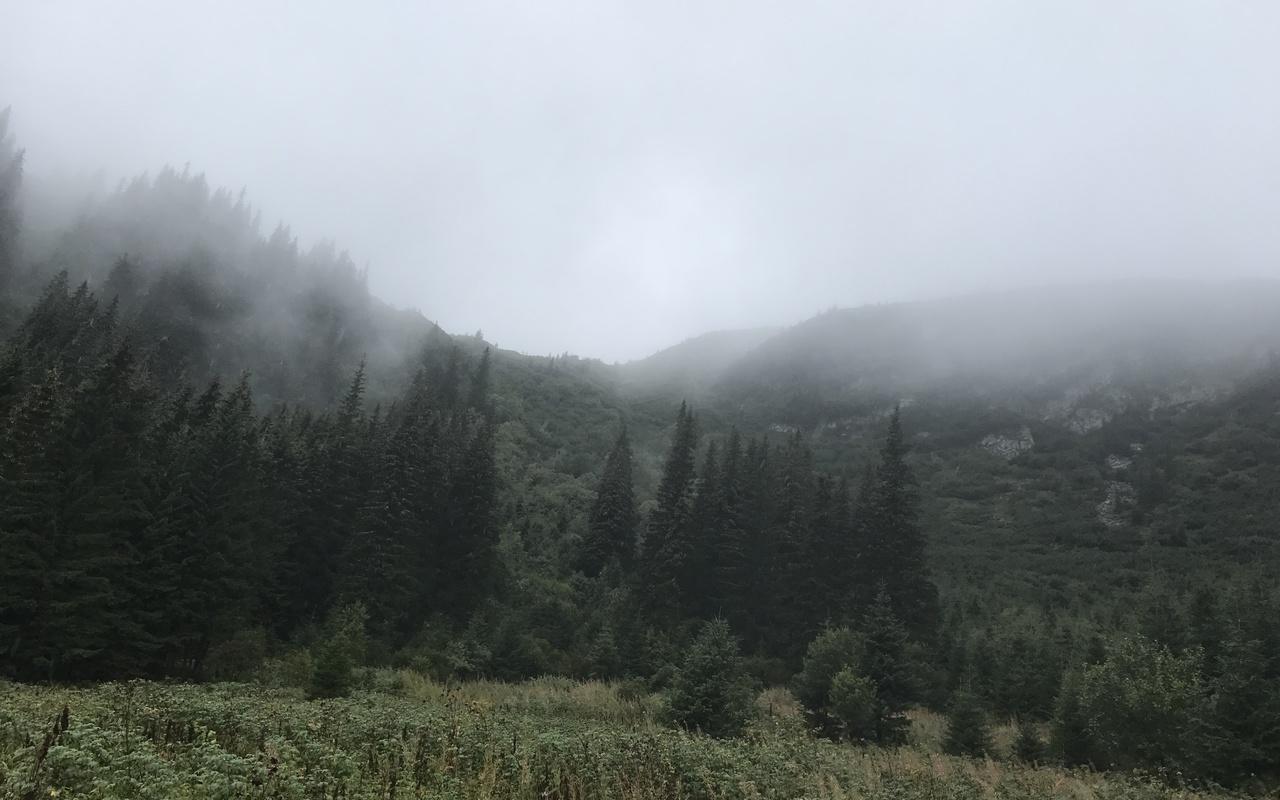 природа, осень, украина, карпаты, горы, леса, туман, дождь