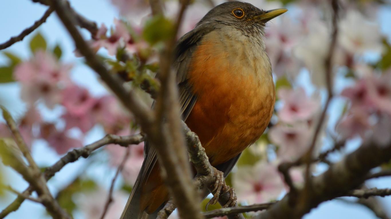 птица, ветка