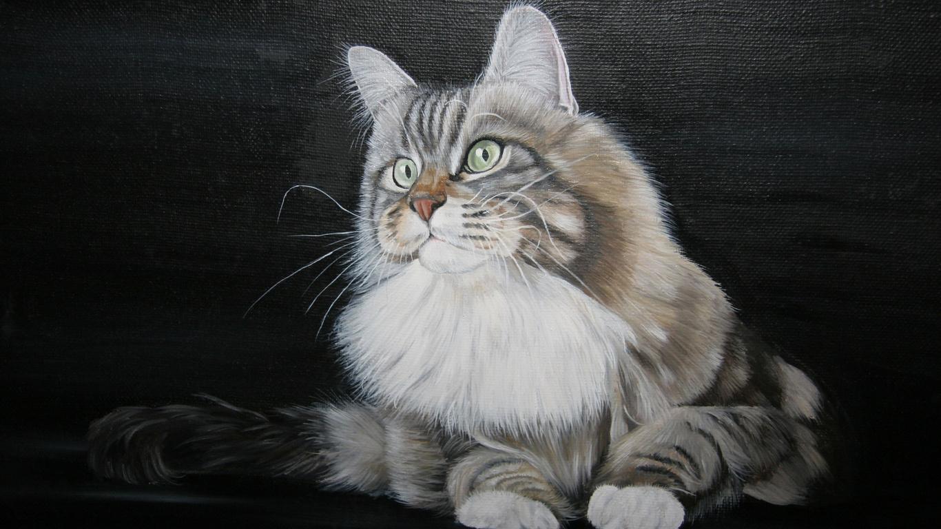 кот, фон, 3d