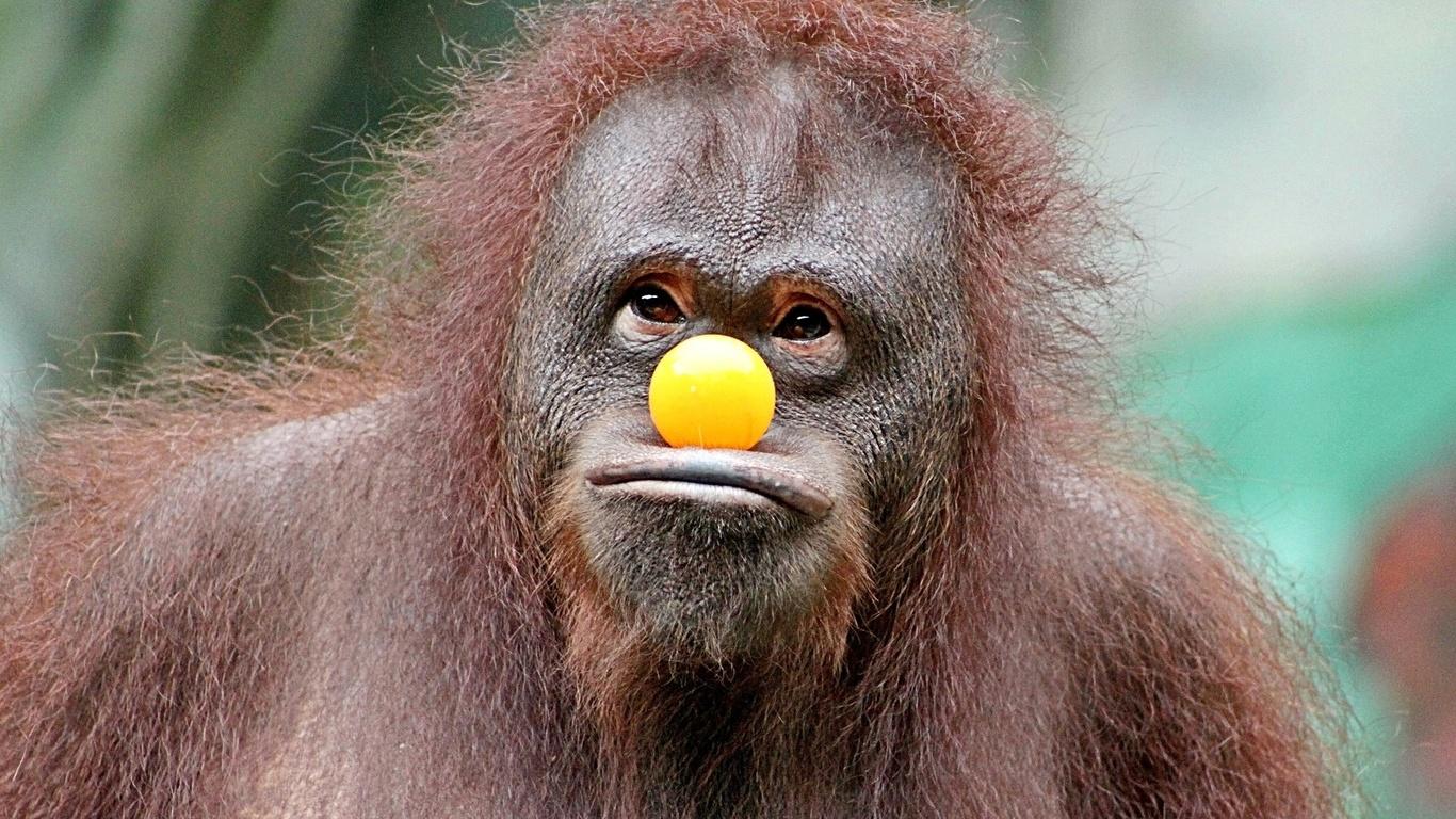 Картинки приколы с обезьяной, картинки про