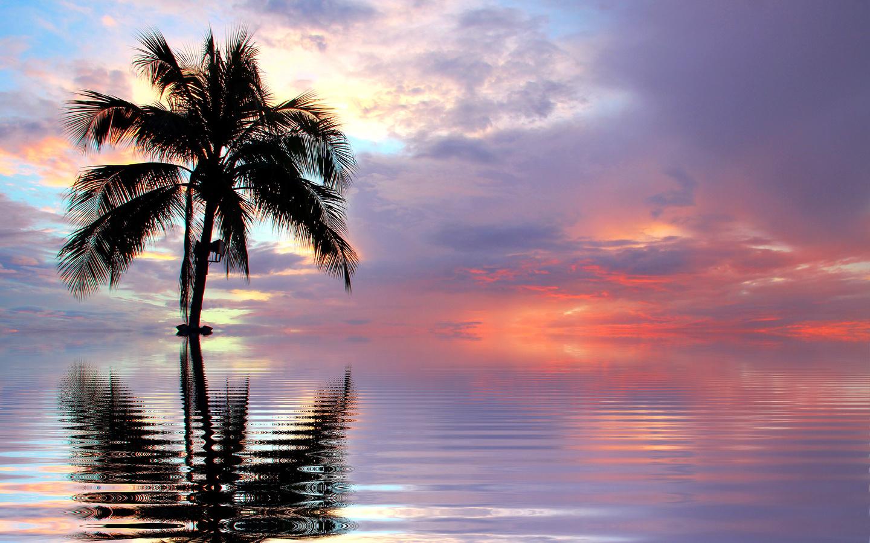 закат, небо, пальма, вода, отражение, ретушь, 3d