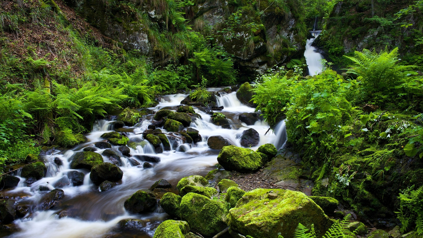 река, природа, воды
