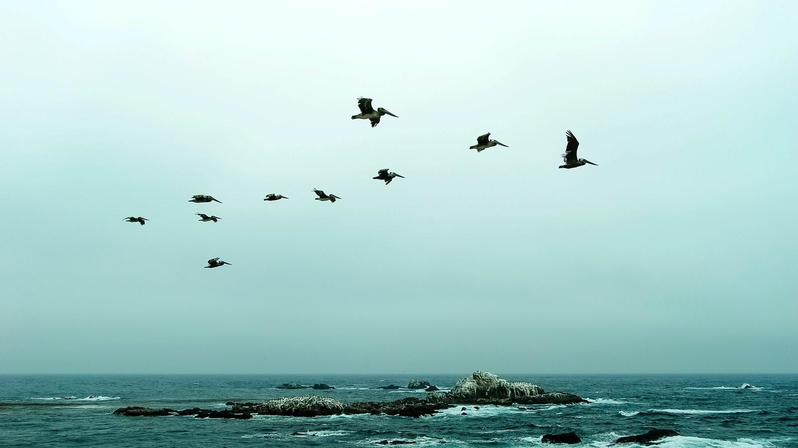 море, скалы, пеликаны