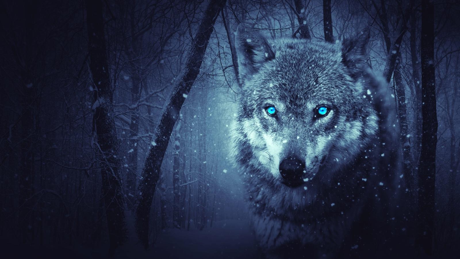 волк, хищник, фотошоп, арт