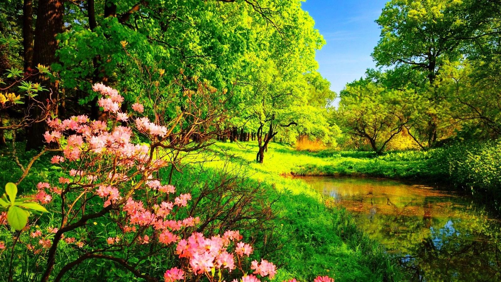 Открытка, найти живые картинки весну и лето для стола