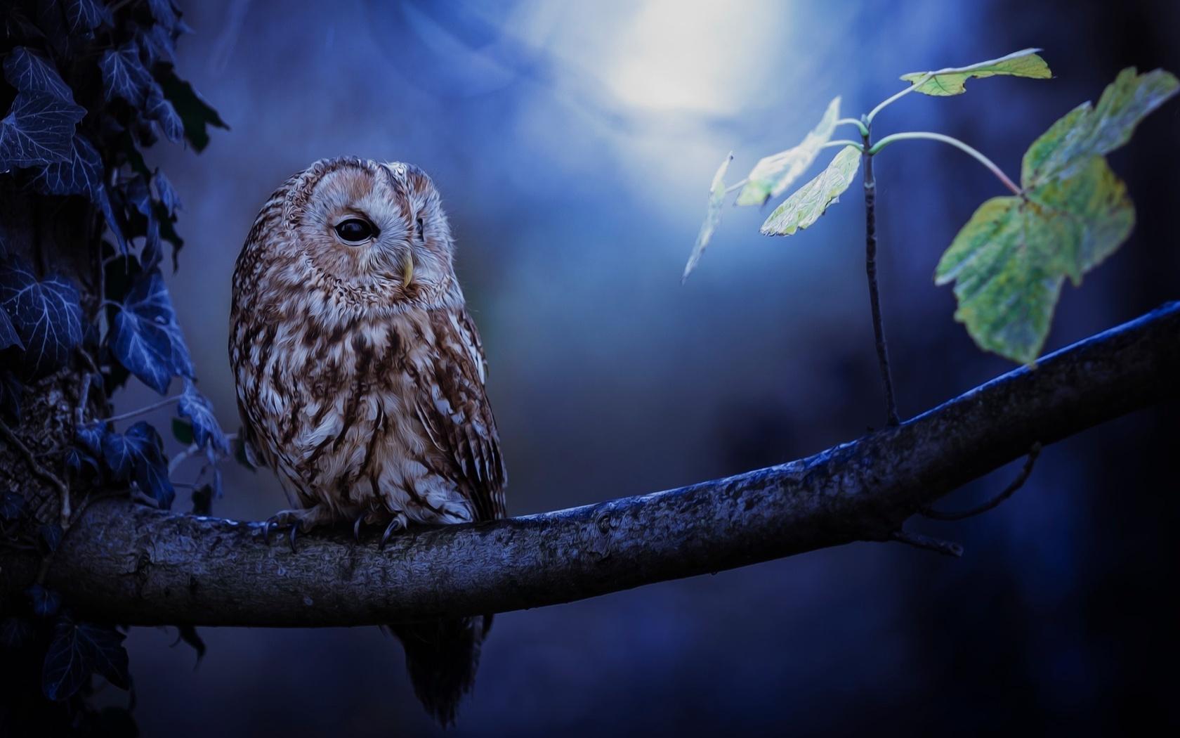 птицы мира, птица, сова, ветка, листья, ночь
