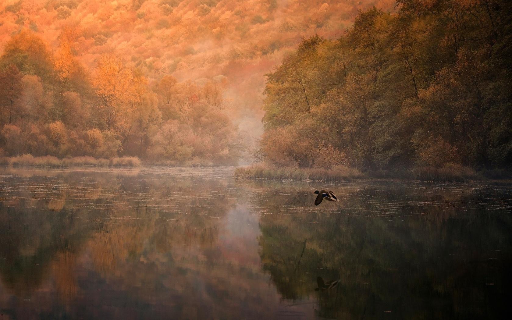 озеро, деревья, природа, утка, летит, осень