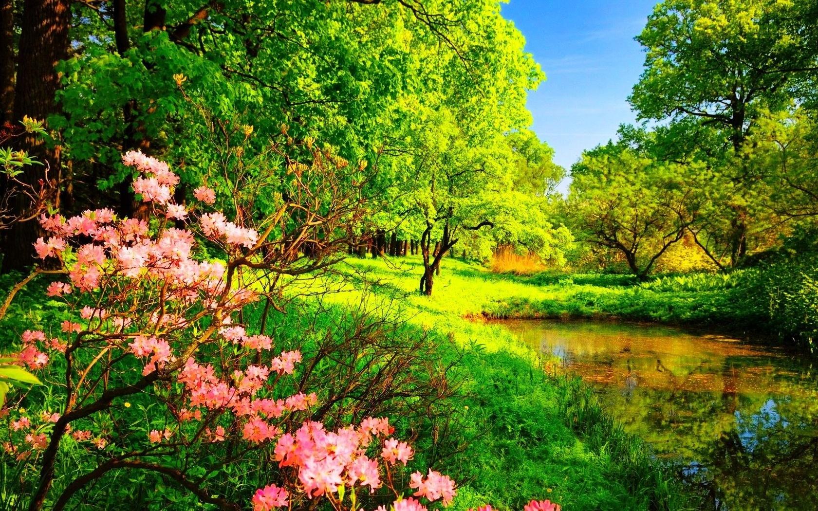 Надписями, открытки с цветами природа