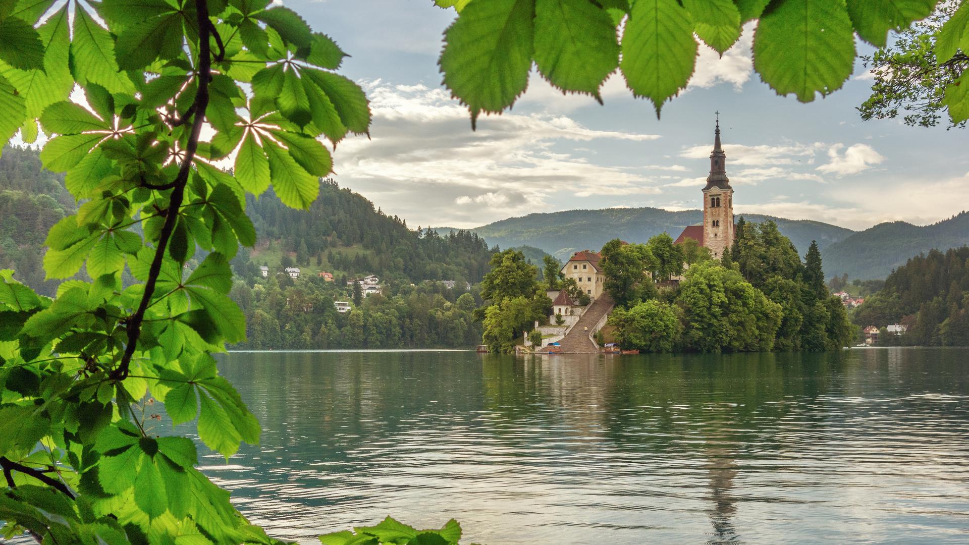природа, пейзаж, словения, горы, озеро, блед, островок, дерево, ветка, листья, каштан