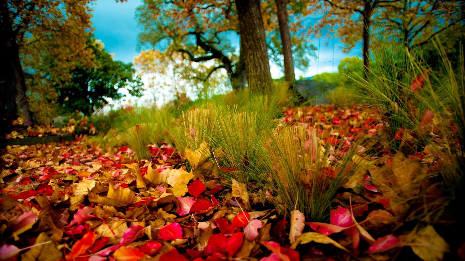 природа, деревья, листья, осень, трава