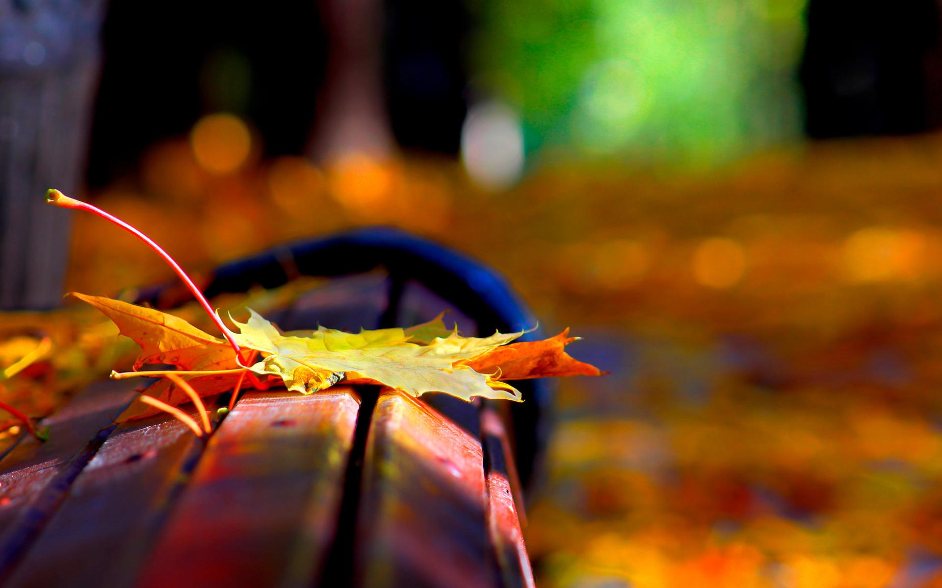 природа, осень, листья, клён, скамья