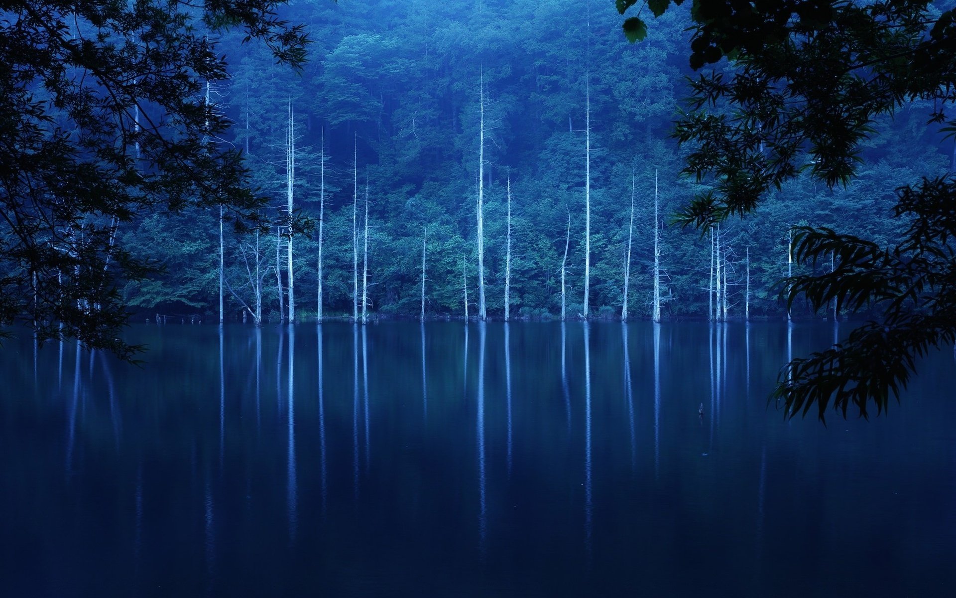 лес, ветки, залив, природа