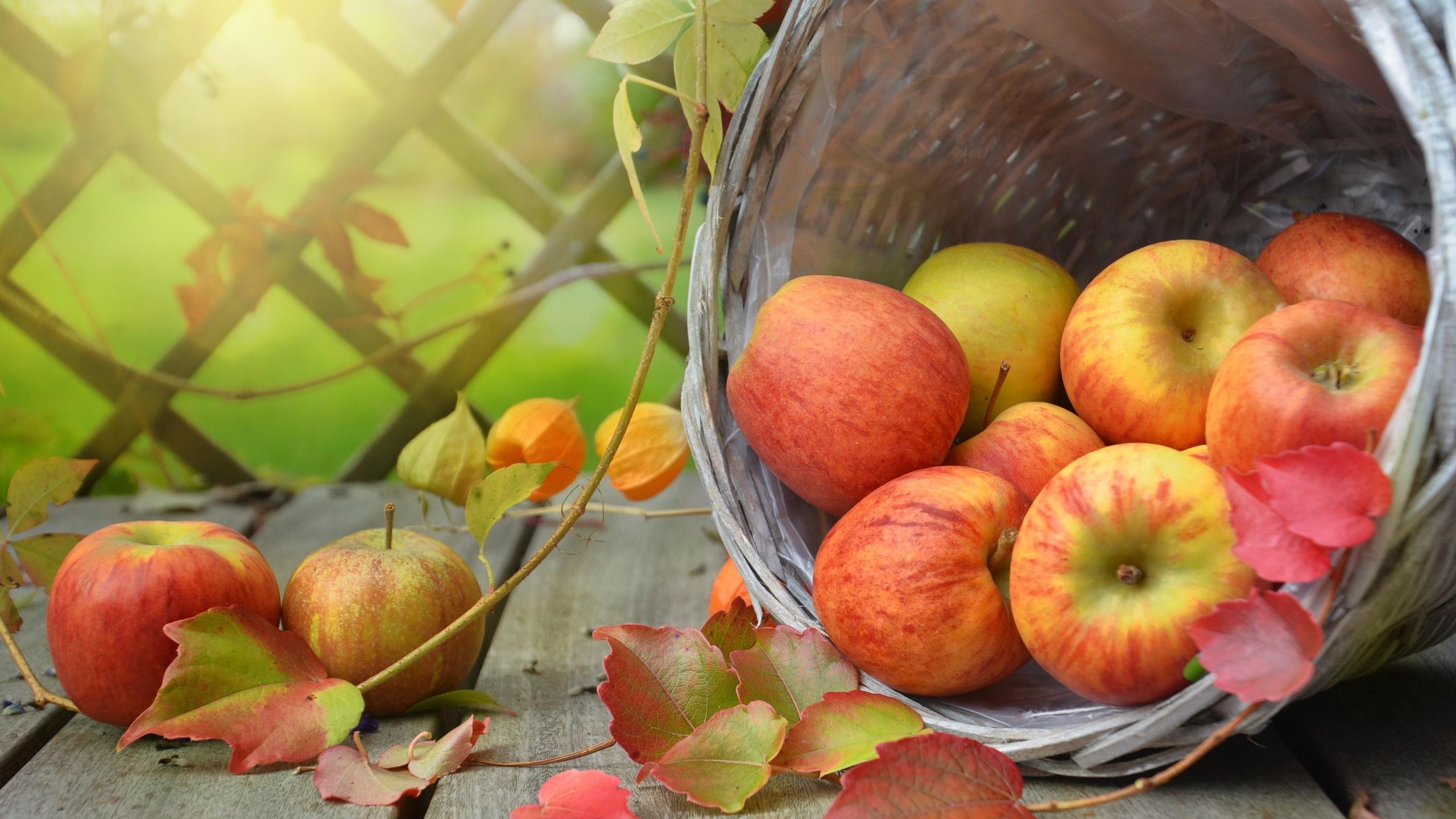 осень, яблоки, корзина, физалис, фрукты, доски, листья, ветки, плоды