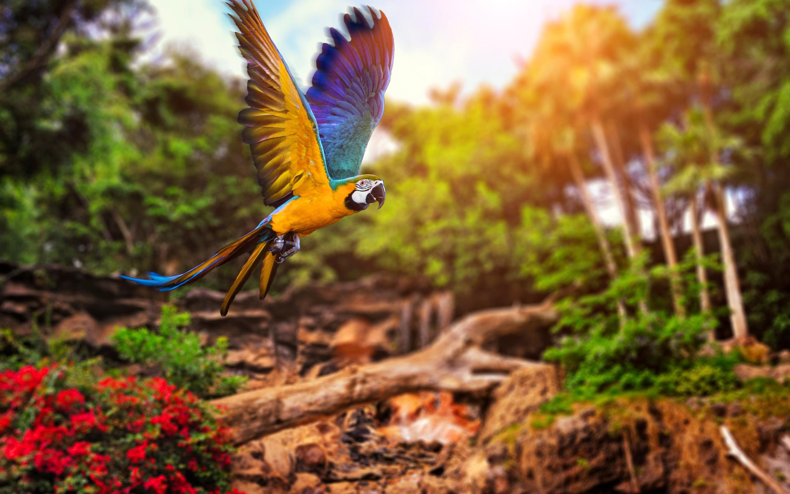 природа, тропики, птица, полёт, попугай