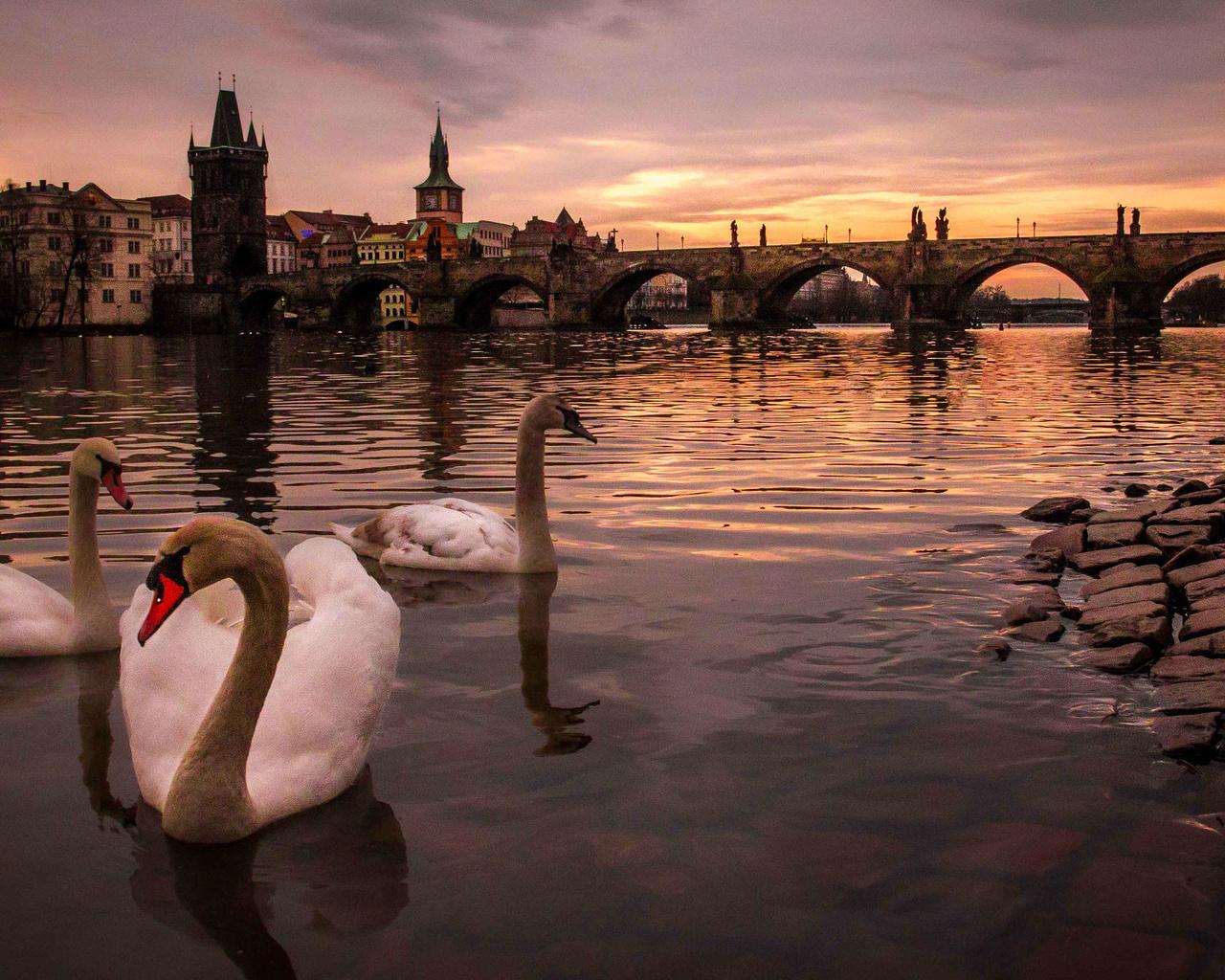 alin dinu, Чехия, город, прага, река, влтава, мост, charles bridge, карлов мост, здания, птицы, лебеди