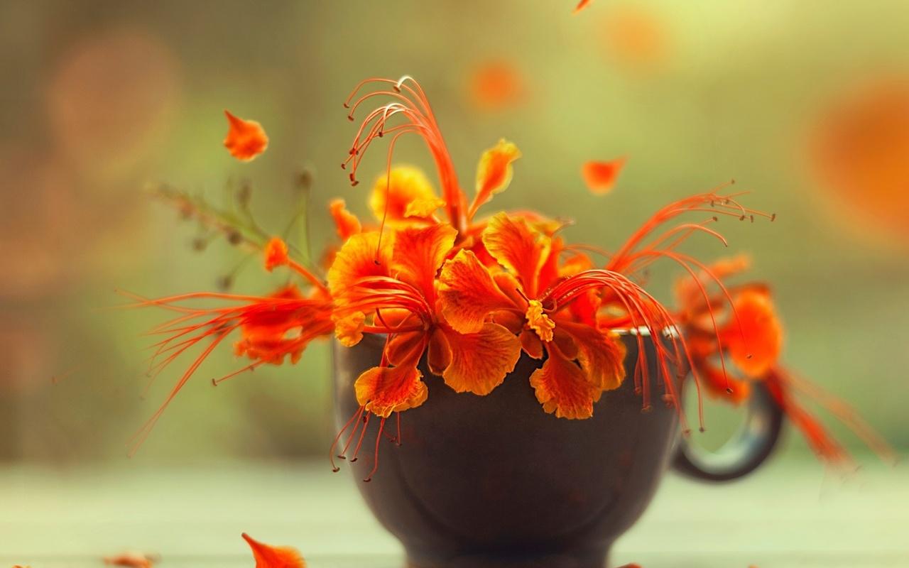 цветы, предметы, боке, ashraful arefin