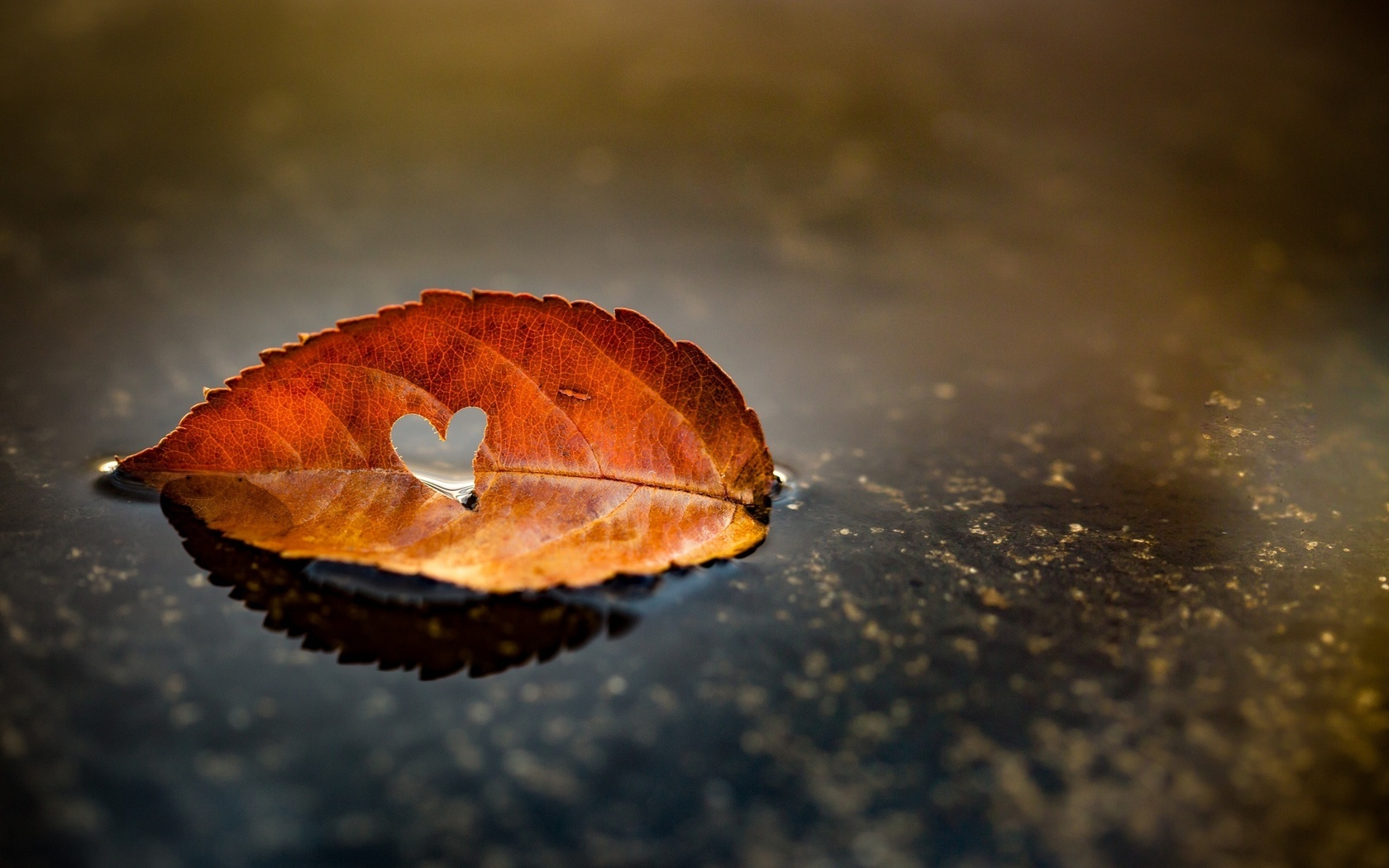 листок, осень, сердце