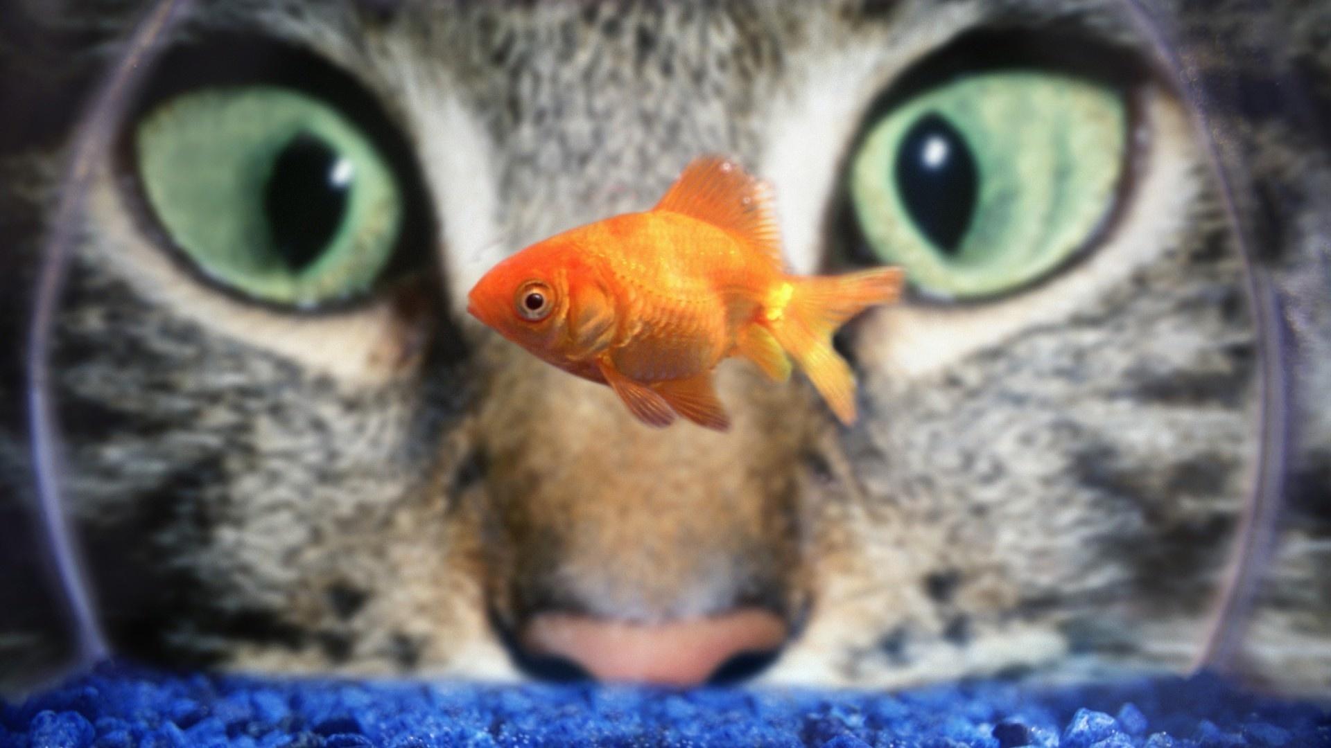 Рыбка в аквариуме смешные картинки, картинки школа