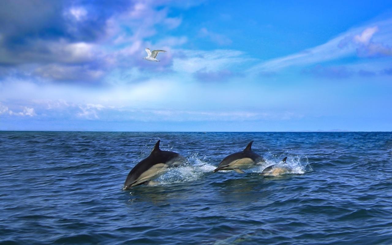 Картинки море дельфины чайки, открытки